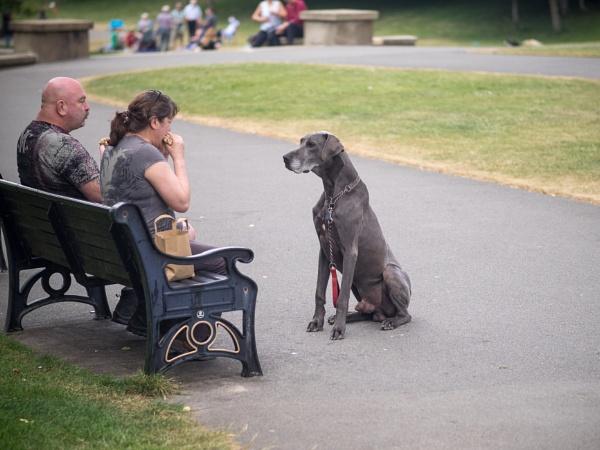 Waiting Dog by victorburnside