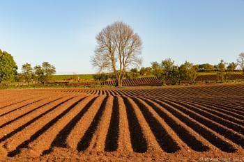 Potatoe country