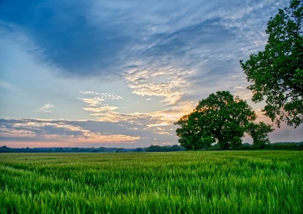 Barley by Halgiver