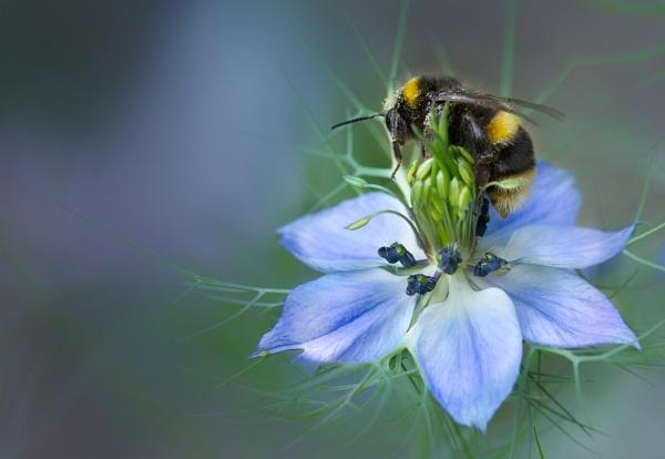 Browsing Bee by BigAlKabMan