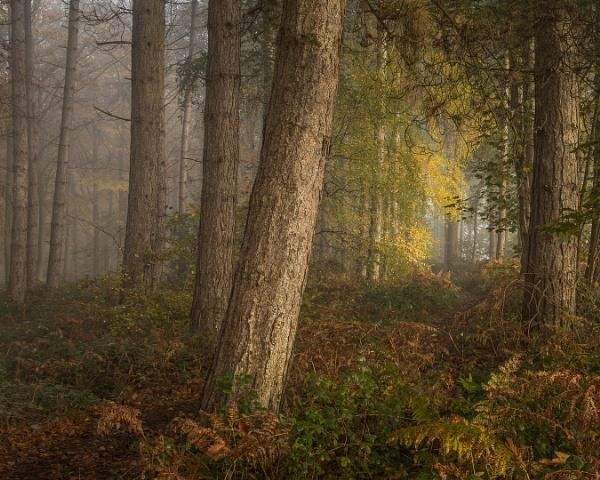Woodland Scene by JelFish