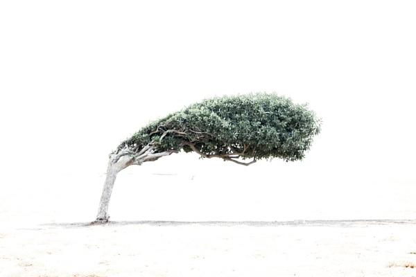 Capetown Tree by SamDownie