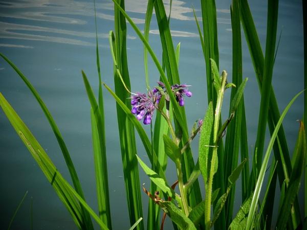 flower by the water by elousteve