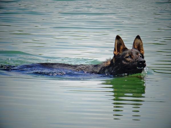 swimmer by elousteve