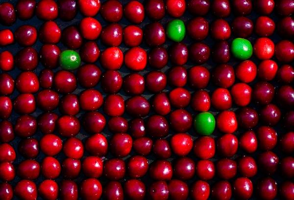 Cherries? by Acancarter