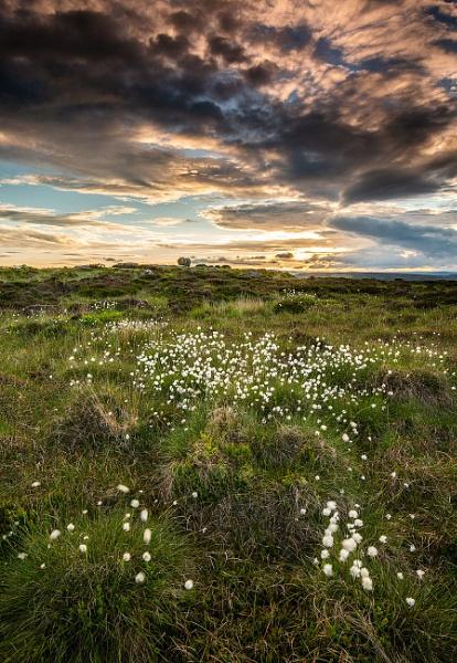 Cotton Grass Sunset by martin.w