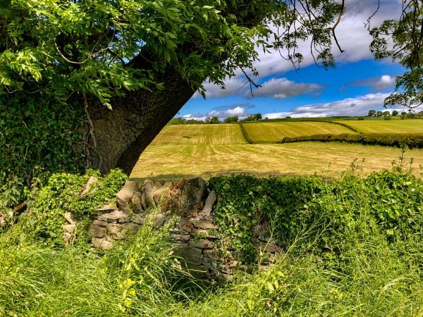 Westwick Fields by aitchbrown