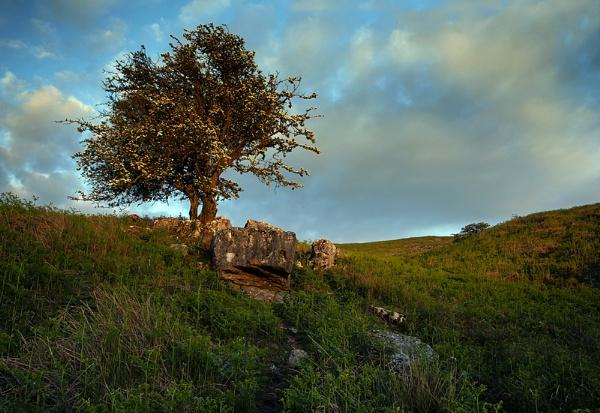 The Hollybush by Buffalo_Tom