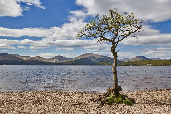 On the Bonnie Banks of Loch Lomond by johnsd