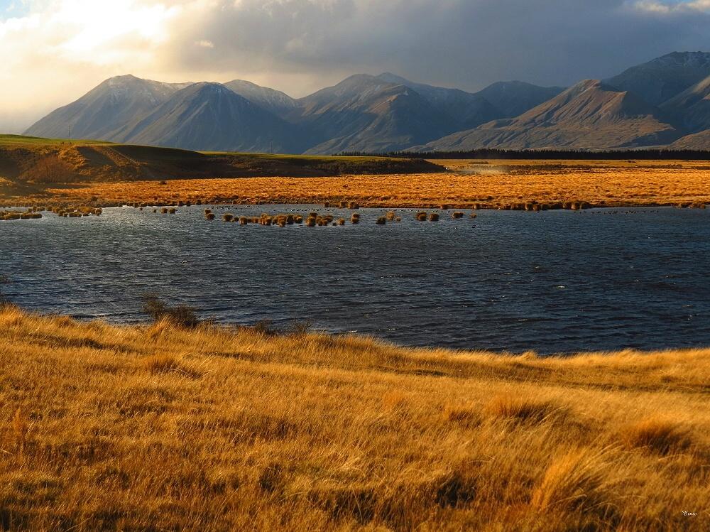 Lake Heron 11 by DevilsAdvocate   ePHOTOzine
