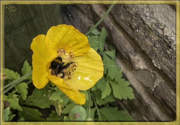 Wildflowers, Fungi, Seed Dispersers. by LynneJoyce
