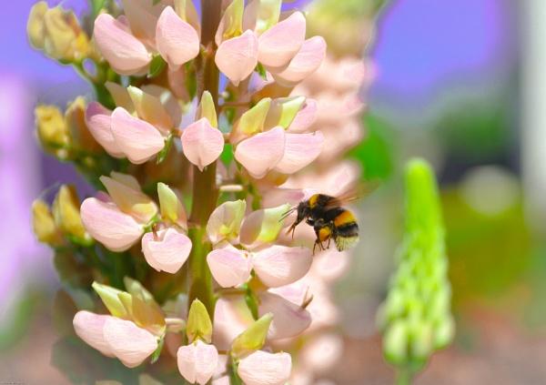 Bumblebee by kelvin7