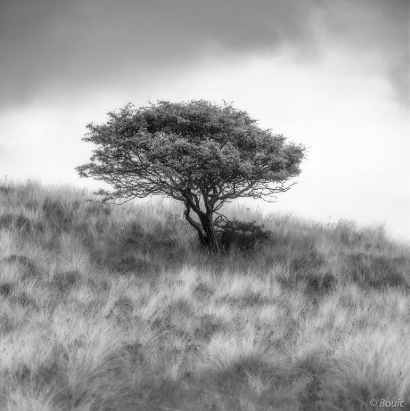 Dunes Tree by bouic