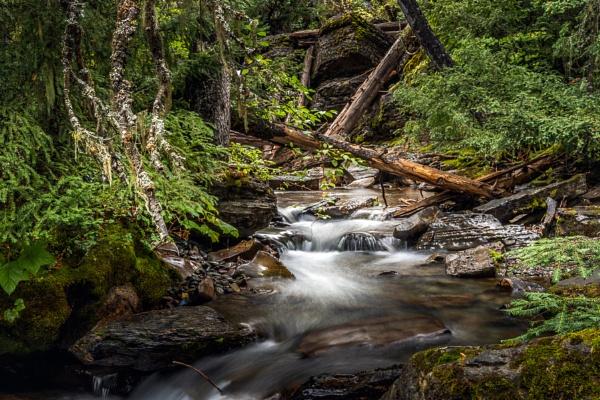 Damp dark Holland Creek in Montana by Phil_Bird