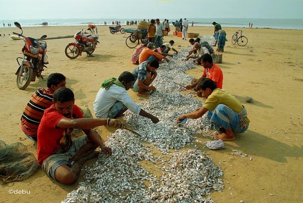Fishermen sell fish on the Digha beach.(30) by debu