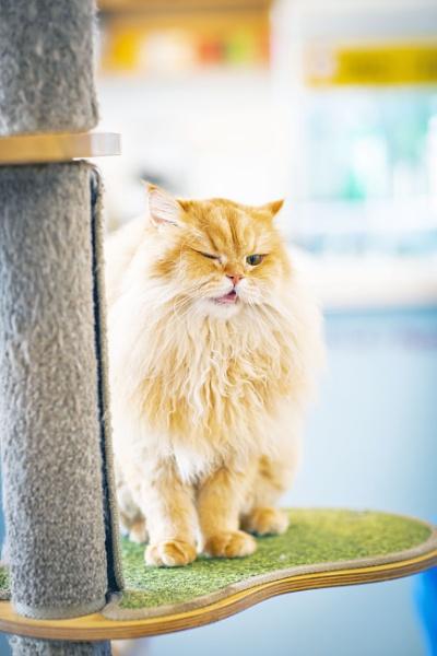 Pretty Kitty by cat001