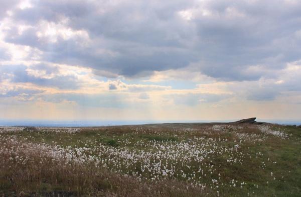 Cotton grass by michaelfox