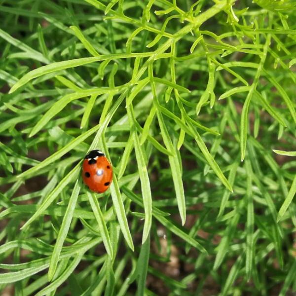 Bugs on green... by Chinga