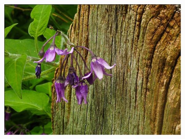 WILD FLOWERS. by kojack