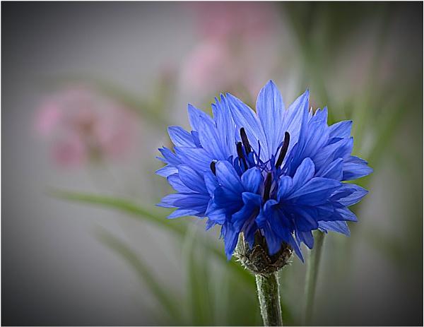 Wild Flower Meadow 2 by capto