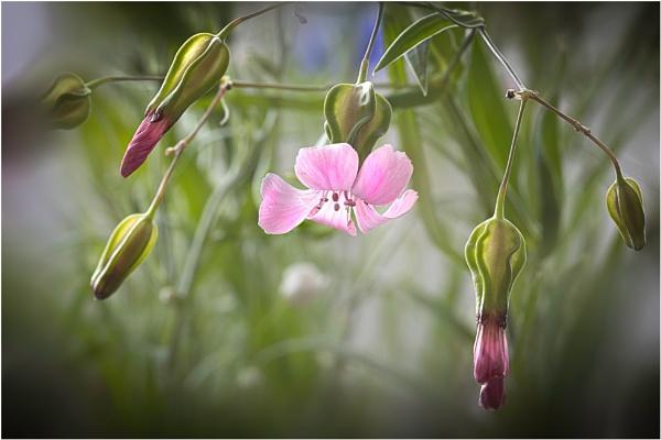 Wild Flower Meadow 3 by capto