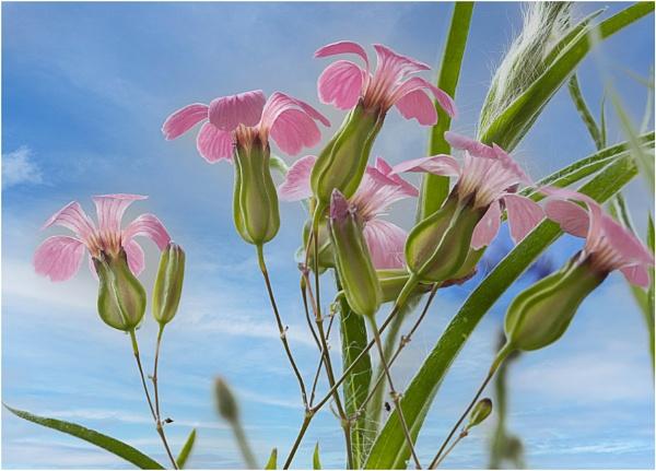 Wild Flower Meadow 4 by capto