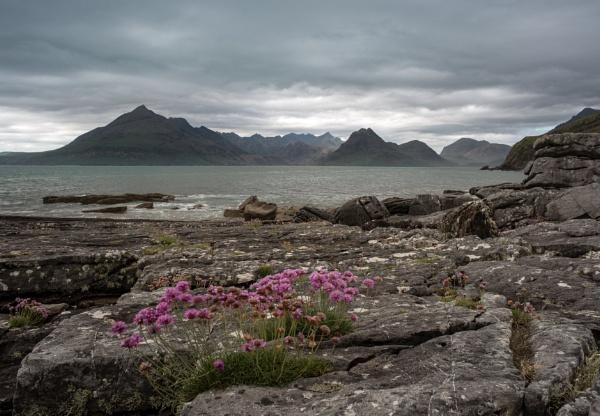 Elgol sea pinks by flowerpower59