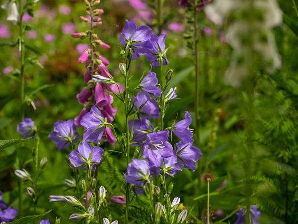 Wild Flowers by victorburnside