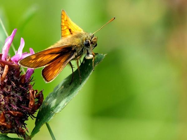 Tiny butterfly by DerekHollis