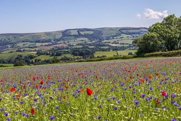 The Wildflower Meadow. by Lencollard