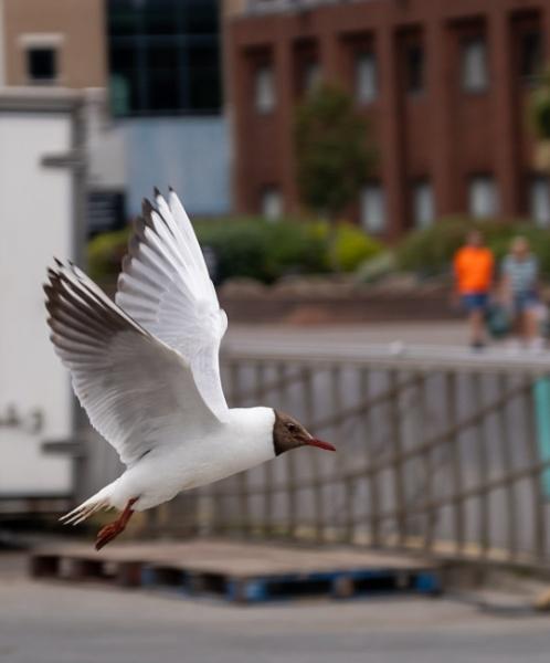 Flyby by webbep
