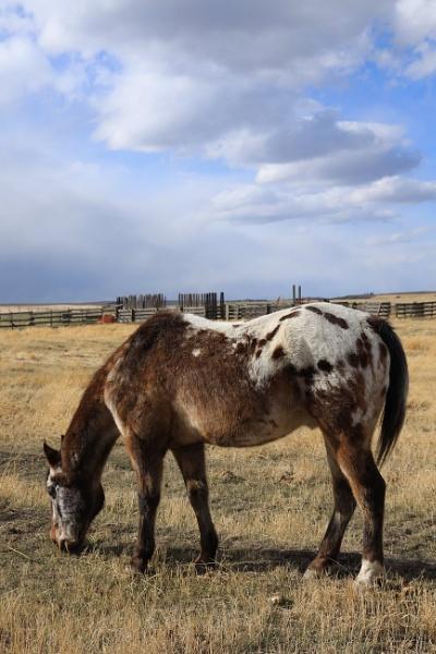 Alberta horse by waltknox