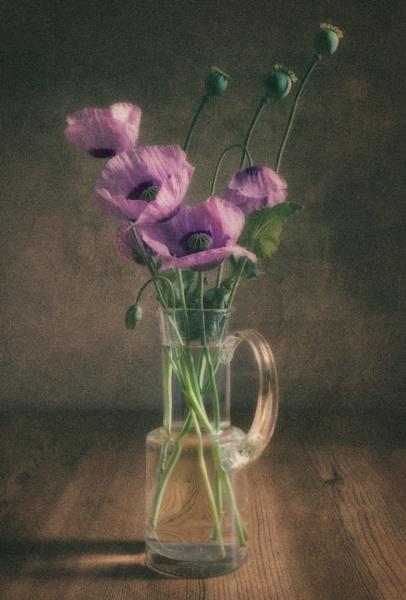 Opium poppy by BigAlKabMan