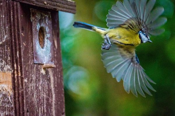Spreading my wings by Photony