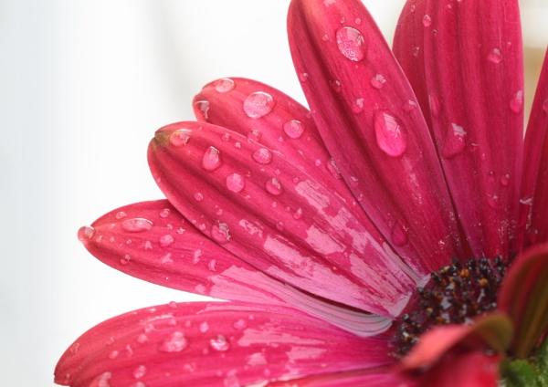 Raindrops by Philipwatson