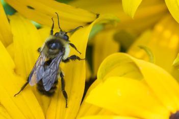 Pollen, Pollen Everywhere