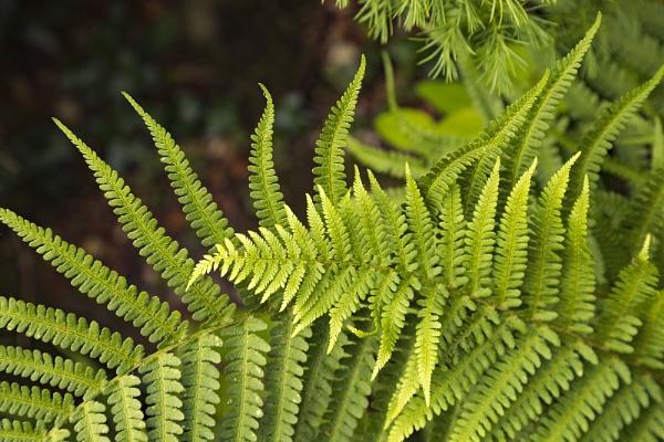 Summer ferns by VincentChristopher