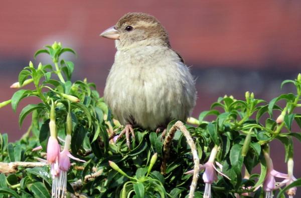 Mrs Sparrow by BlueJonnyp