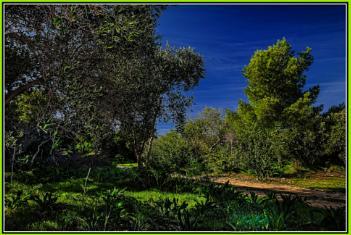 Mizieb: Malta's northern woodland