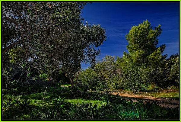 Mizieb: Malta's northern woodland by Edcat55