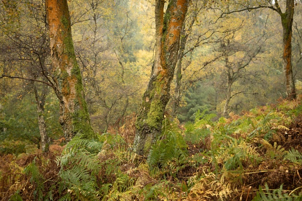 Woodland Colours by JelFish