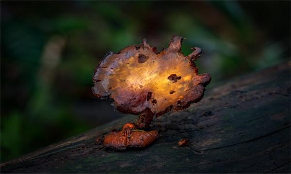 Fungi by tvhoward950