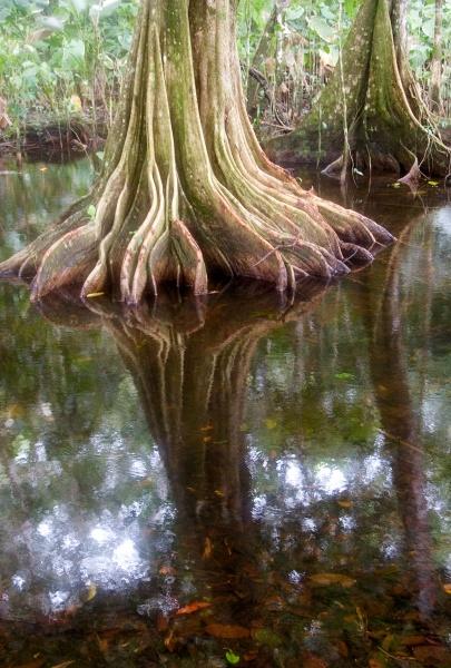Rain Forest by Acancarter