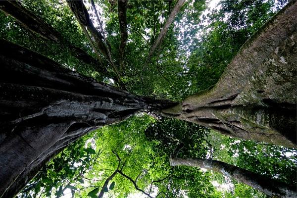 Forest Vertigo by Acancarter