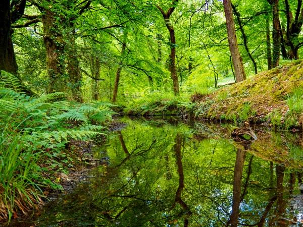 A Day of Reflection by JohnDyer