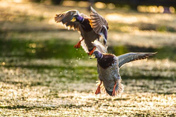 Action Landing by chensuriashi