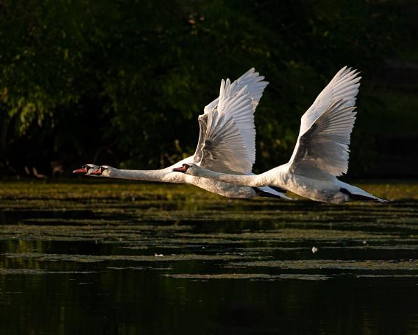Wings Up At Dawn by chensuriashi