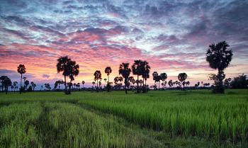 Cambodian Silence.