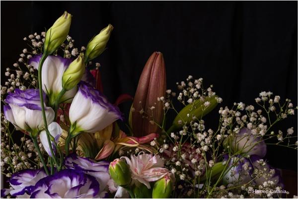 Flower Power II by Herbert_Catania