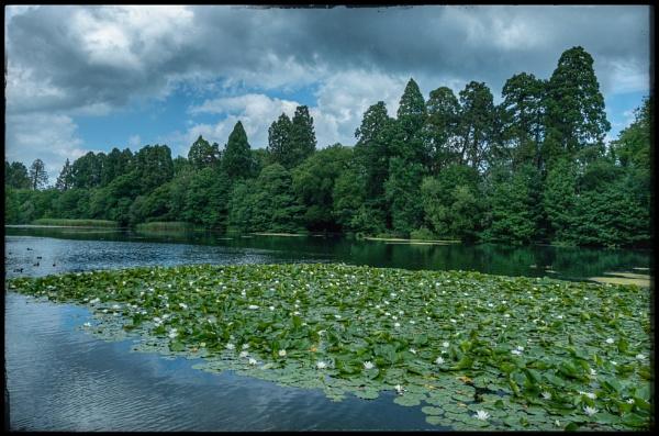 Living Lake by pjdavies_wales